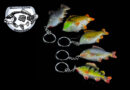 Beauty Carps: Accessoires für (Karpfen-)Angler